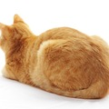 猫のおなら、聞いたコトある?しょっちゅうしてたら注意が必要かも・・・