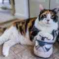 猫は『飼い主を忘れる』?忘れられてしまう3つのケースと絶対すべき予防策…