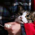 猫の巻き爪の原因は?そして気になる費用も!