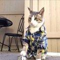 ベルを鳴らしてごはんを貰う猫ちゃん、動画後半にもご注目!