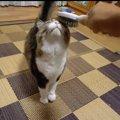 ブラッシングに目がない猫ちゃん、たまらず…