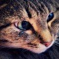 猫の瞬膜が出っぱなしなのはどうして?理由や原因は何?