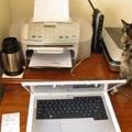 思わずビクッ!プリンターの音に翻弄される猫ちゃん