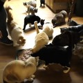 ものすごい数の猫!700匹を超える保護猫が暮らす楽園リポート