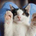 猫の巻き爪の症状とその予防について