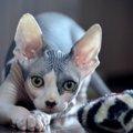 猫がゴキブリを捕まえるのをやめさせる方法3つ