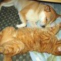 猫たちとの不思議な縁