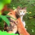 子育てで痩せ細った猫…3匹の子猫と共にレスキュー!