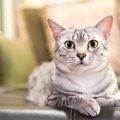 猫の妖怪・・・ニャンコにまつわるモノノケのお話