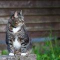オス猫の特徴や性格!メス猫との違いからかかりやすい病気まで
