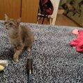 ハ…ハ…ハクション!くしゃみにビックリした猫ちゃんの決定的瞬間