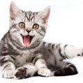 猫の声の種類とそれぞれの声ごとの気持ち
