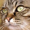 猫のひげの重要な役割とは?