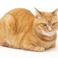 猫以外の動物も香箱座りをする!?同じネコ科のいきものは?