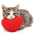 猫にあんこを食べさせる正しい与え方