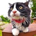 猫の気持ちがわかるおヒゲの状態4パターン