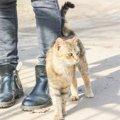 猫が尻尾でスリスリしてくるときの意味4つ
