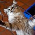 猫が遊びたい時にする6つの仕草