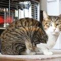 猫に寒さ対策は必要?何を用意すればいいの?