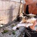 頭をひどく打ち水も飲めない…レスキューされた野良猫の奇跡の生還!