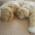 猫のベル・すずちゃんお兄ちゃんのお出迎え