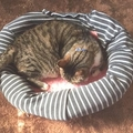 不要になった部屋着を猫ベッドにリメイク!