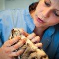 猫に顎ニキビができる原因と治療法