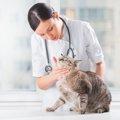 猫の顎が腫れている時の症状や原因、治療法について