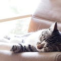 猫が寝る場所!快適な寝床を準備しよう!