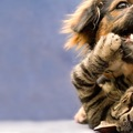 猫と犬が喧嘩したら?対処法3つ
