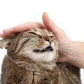 猫がゴロゴロ言ってくれないのはなぜ!?考えられる理由