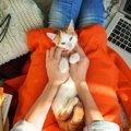 猫が側に居て安心する人の特徴8選