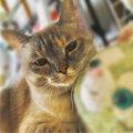 保護猫マシロとの出会いに感謝