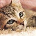 猫とコミュニケーションを取って仲良くなる5つの方法