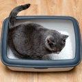 猫がトイレで寝るのはどうして?