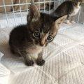 離乳が出来るまで子猫達のミルクボランティアを体験