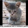 女性に救いを求めてきた子猫には、それなりの理由があった・・・