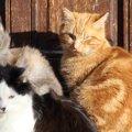 謎が多い『猫の集会』について調べてみたら『猫としての暮らし方』が…