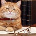 元気で快適シニアライフ♪猫の体調を見分ける4つのコツ