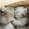 猫は夢を見る?メカニズムや内容、仕草まで