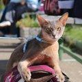 猫ちゃんも散歩させるべき?それとも必要はない?