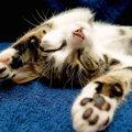 プニプニでかわいい♡猫の肉球のヒミツ