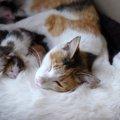 猫が出産する時期と飼い主にできること