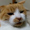 猫同士のケンカ勃発!からの…「この争いに意味はあるのか……」