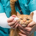 猫の目が赤い時の症状と治療法