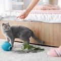 トラウマ回避!猫の『上手な』叱り方4つ