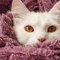 猫が飼い主の服の中に入ってくる7つの心理
