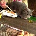 猫ちゃんも大満足!BBQでお肉を堪能♪