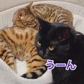 先住猫さん、新入り猫さん、仲良くなれるかな?!