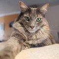 猫のイタズラには意味がある?困った行動への対処法と向き合い方